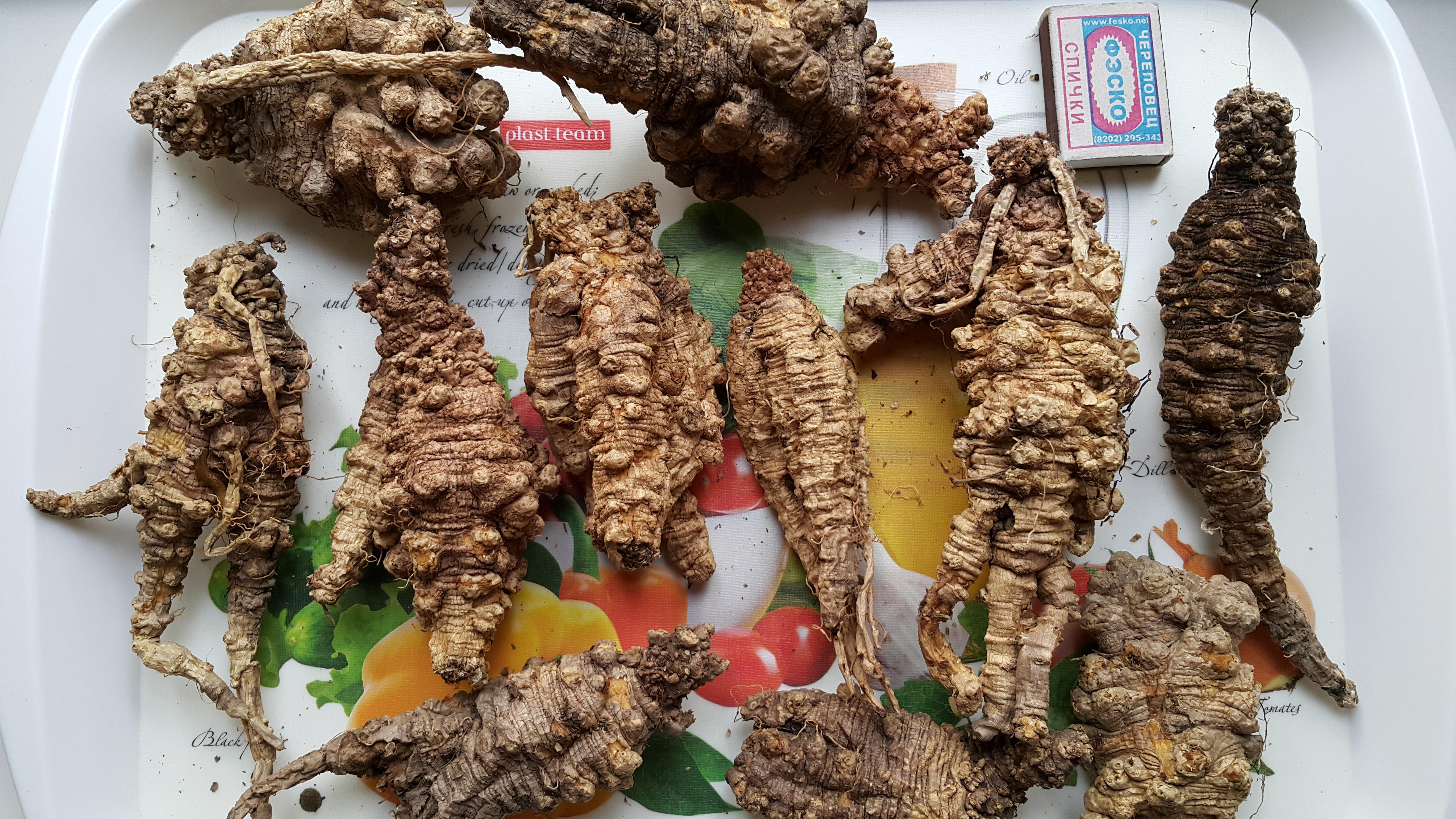 Дикие  сушенные корни кодонопсиса 5-10 летнего возраста