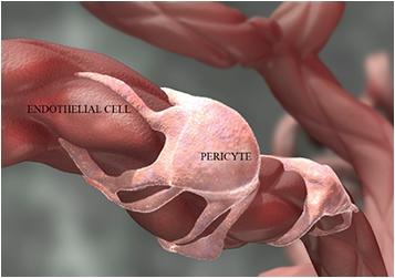 Химиотерапевтические препараты усиливают метастазирование