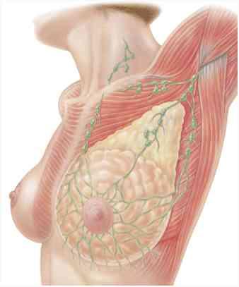 sentinel_node_breast