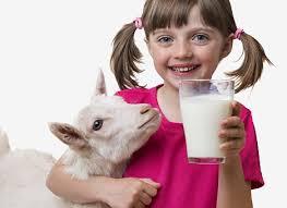 козье молоко 1